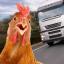 公鸡模拟器