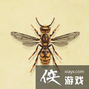 植物森友会蜜蜂价格简介
